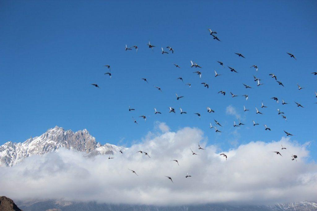 Annapurna Circuit Trek Views