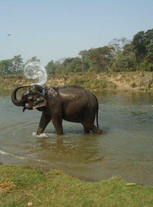 Elephant ride at Chitwan Jungle Safari