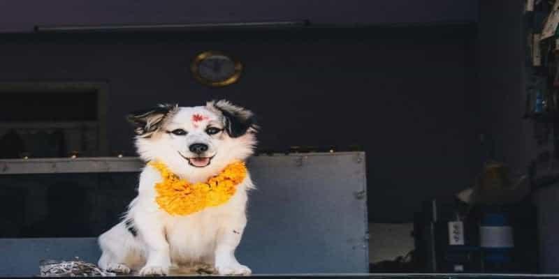 Day of the dogs, Kukur Tihar